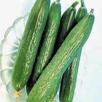 20 graines Légumes-Concombre-Burpless Tasty Green